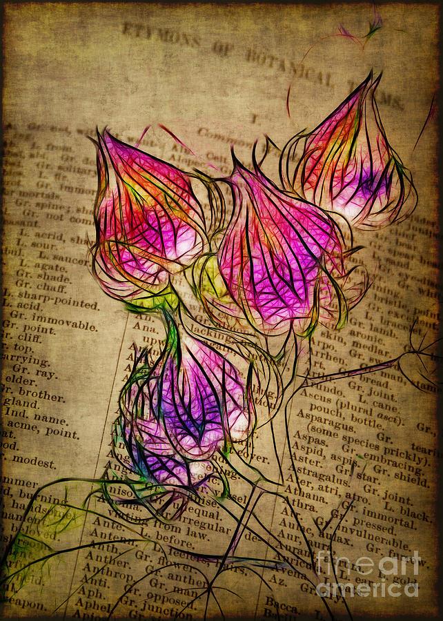 Seedpod Photograph - Faerie Caps by Judi Bagwell