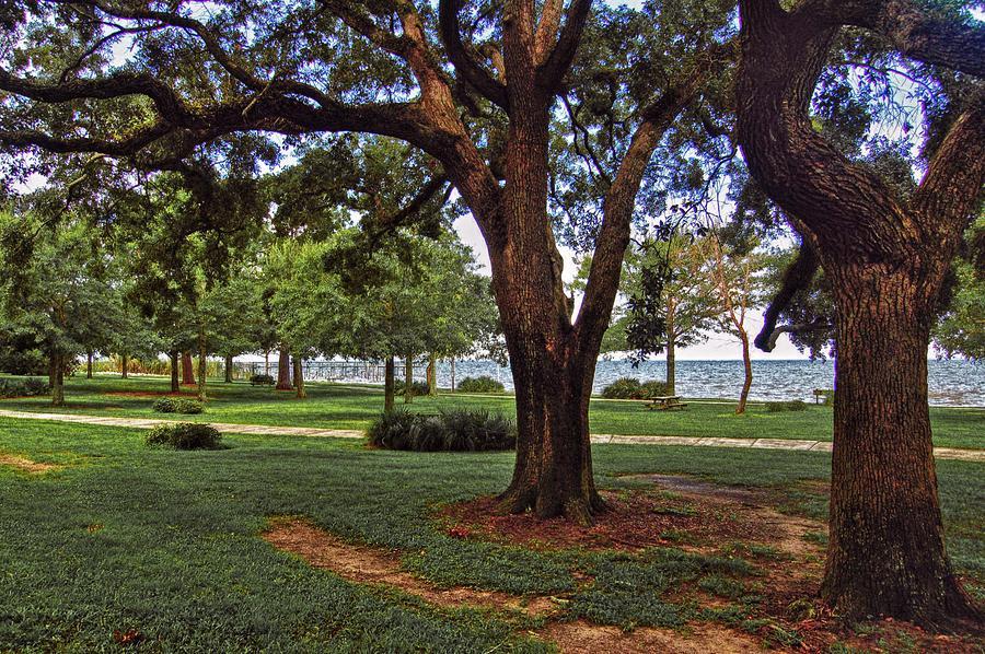 Alabama Photographer Digital Art - Fairhope Lower Park 2 Trees by Michael Thomas