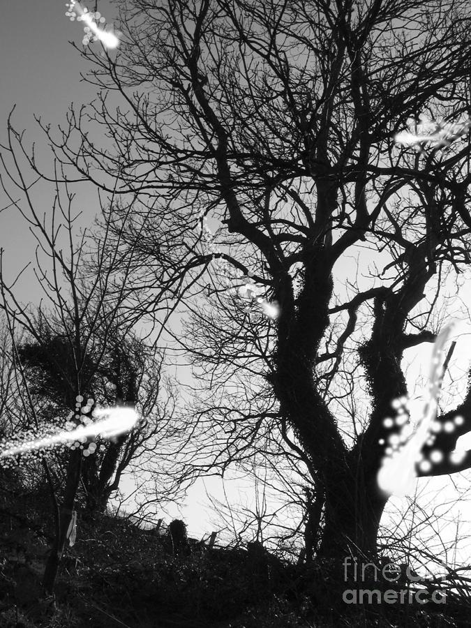 Digital Photography Photograph - Fairies  by Trevor Fellows