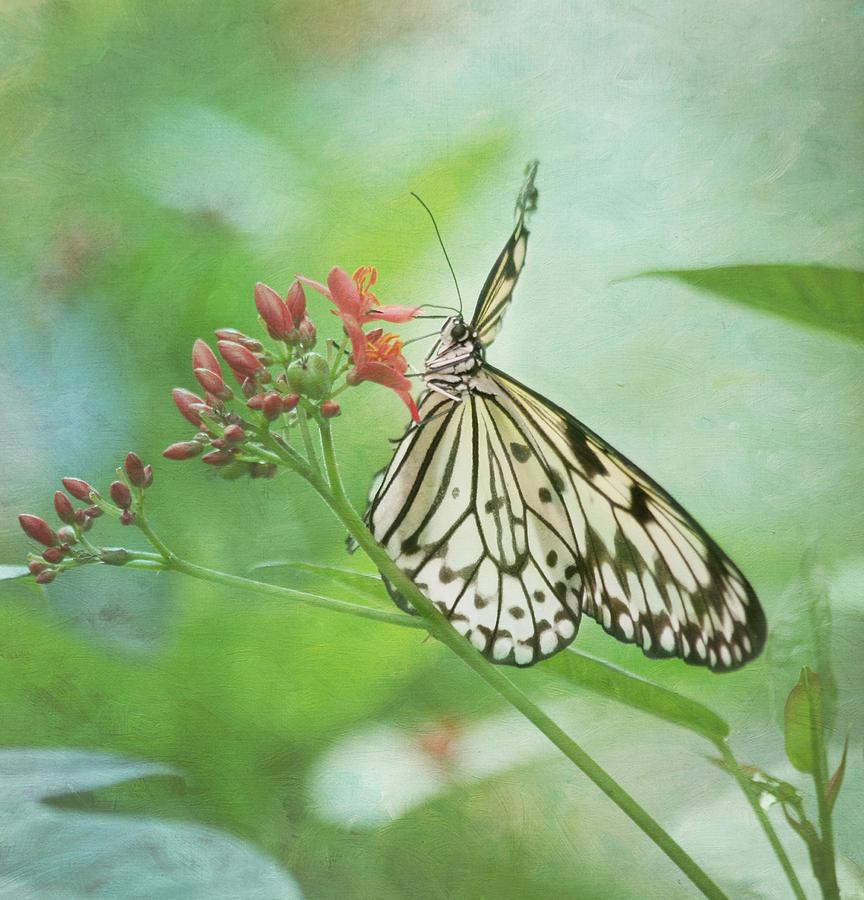 Butterfly Photograph - Fairy Dance by Kim Hojnacki