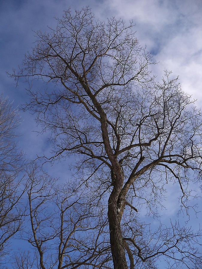Trees Photograph - Fairy Tale Tree by Corinne Elizabeth Cowherd