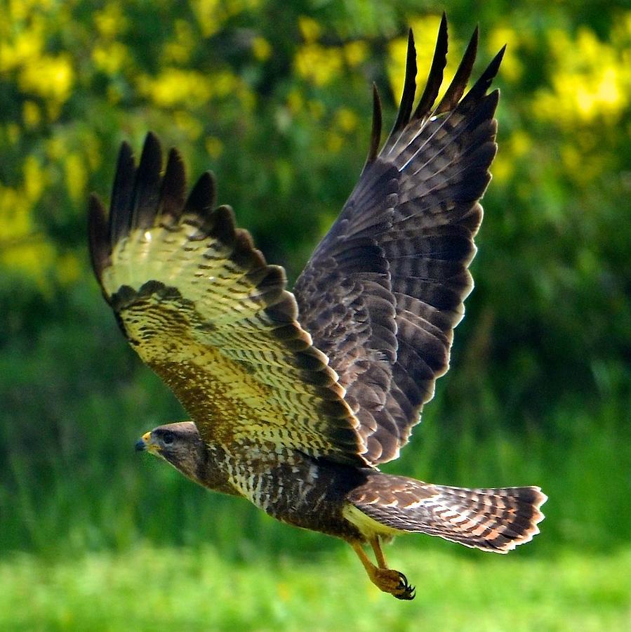How is the UAE ensuring falcon survival? - Abu Dhabi World
