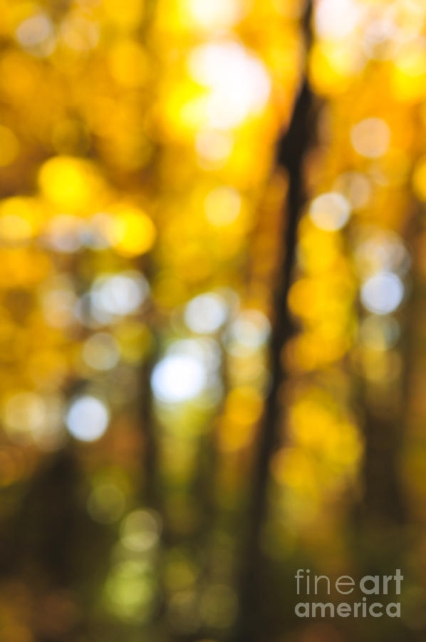 Nature Photograph - Fall Abstract by Elena Elisseeva