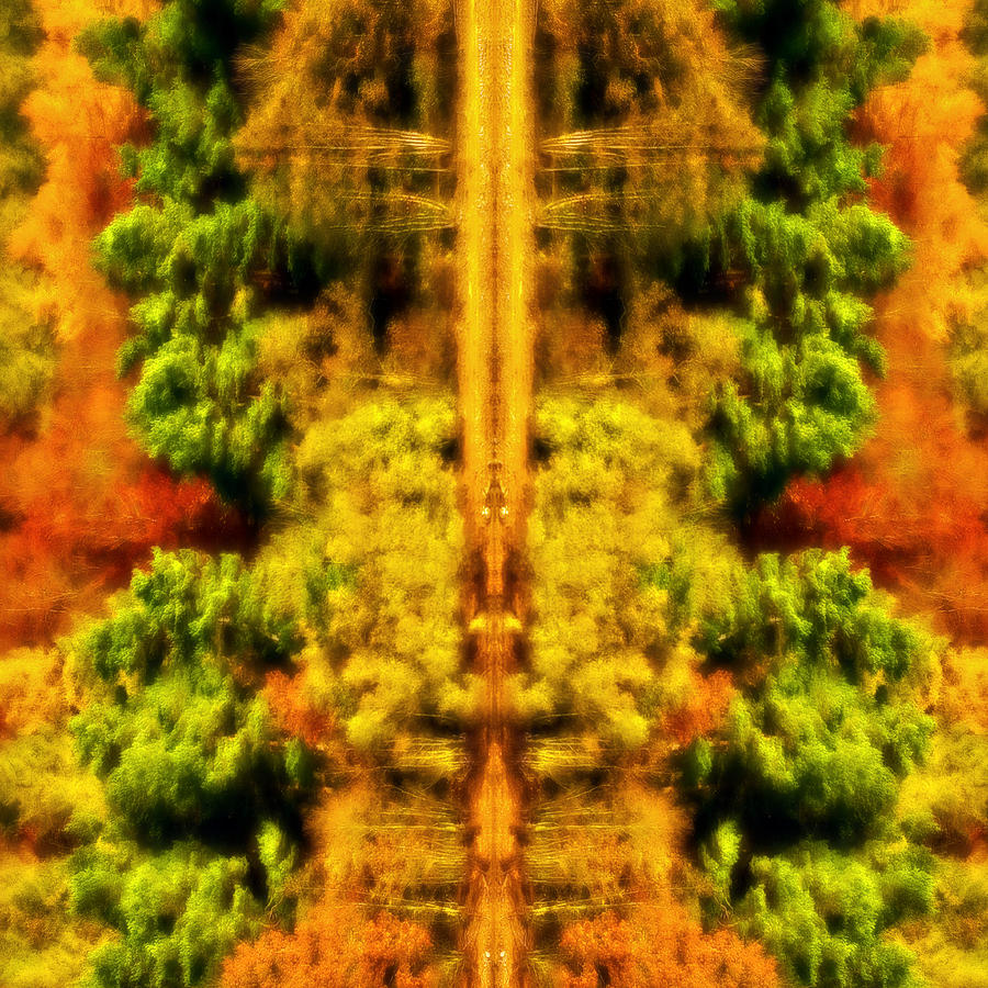 Autumn Photograph - Fall Abstract by Meirion Matthias