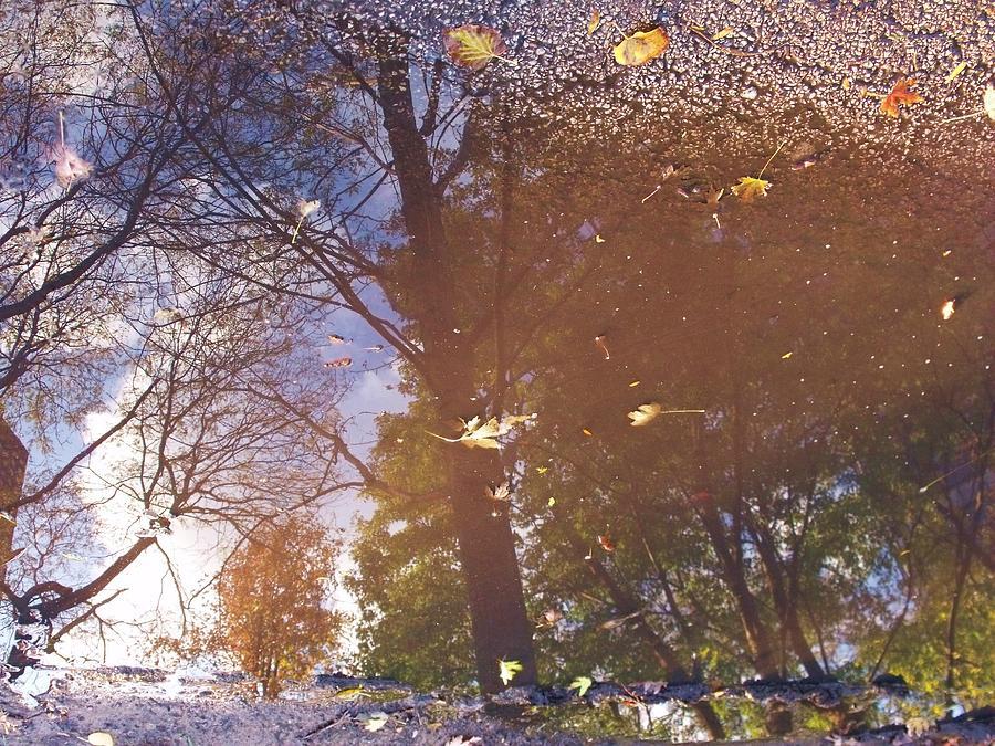 Autumn Photograph - Fall Asphalt by Anna Villarreal Garbis