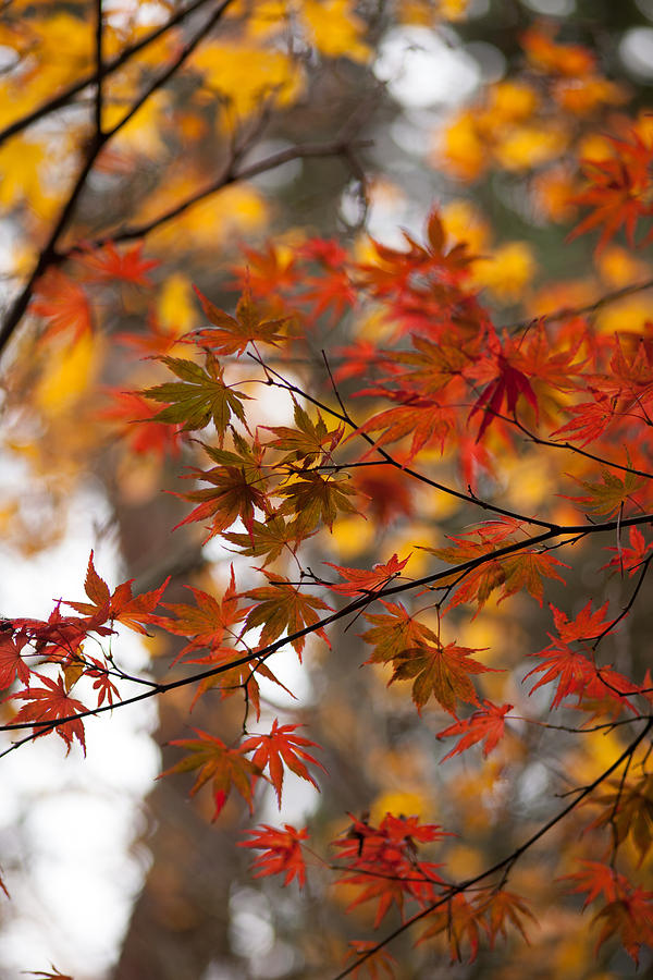 Acer Photograph - Fall Color Montage by Mike Reid