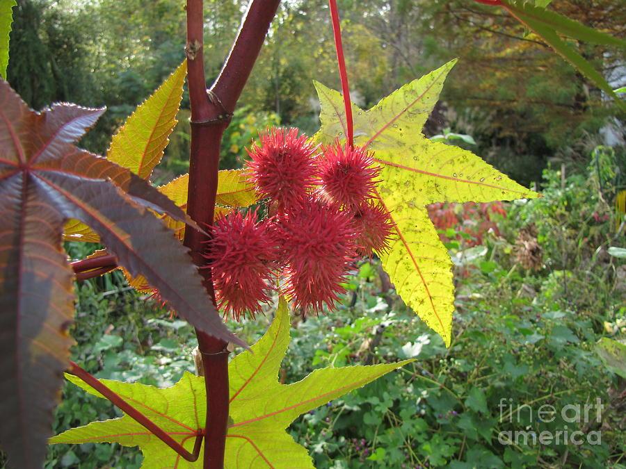 Fall Photograph - Fall Color by Richard Nickson