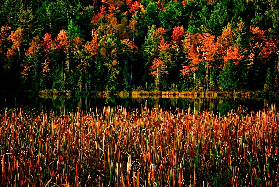 Lake Photograph - Fall Colors by Andre Faubert