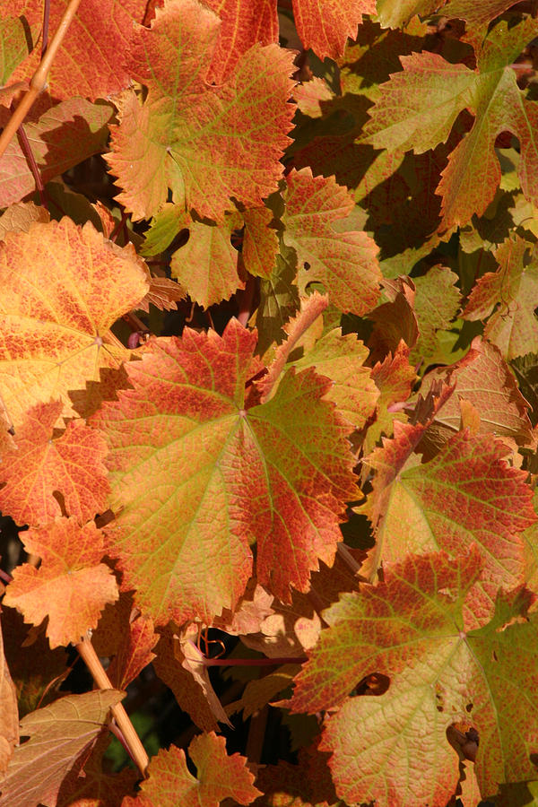 Fall Colors Photograph - Fall Colors by Diane Bohna