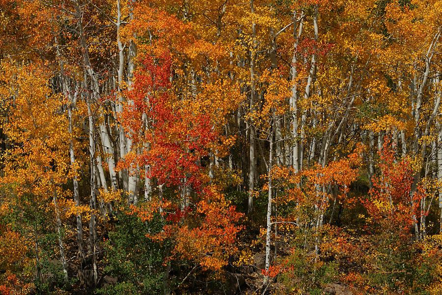 Fall Colors Photograph - Fall Colors Grand Mesa by Ernie Echols