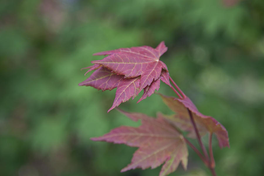 Fall Leaves Photograph - Fall Colors by Molly Heng