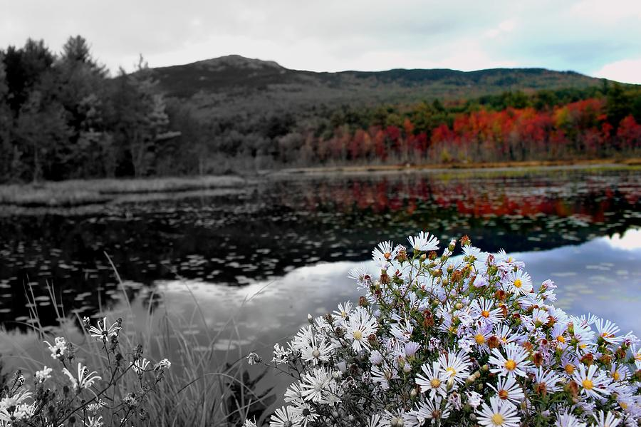 Flowers Photograph - Fall Creeps In by Rick  Blood