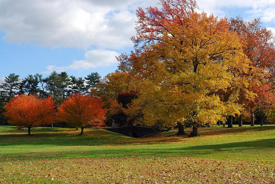 Landscape Photograph - Fall Foliage by Lisa Phillips
