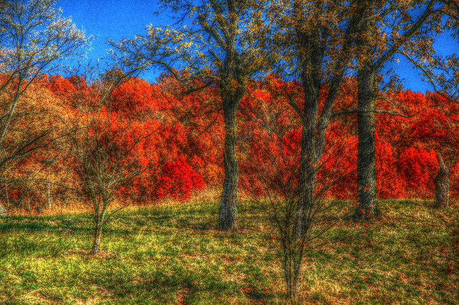 Fall Photograph - Fall Foliage by Ronald T Williams