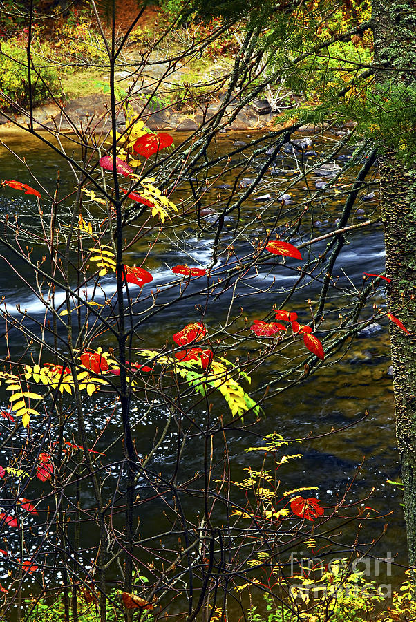 Autumn Photograph - Fall Forest And River by Elena Elisseeva