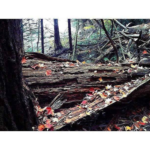 Fall Photograph - Fall Forest by Natasha Marco