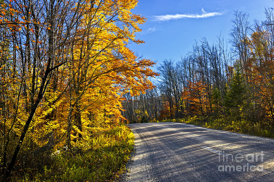 Road Photograph - Fall Forest Road by Elena Elisseeva