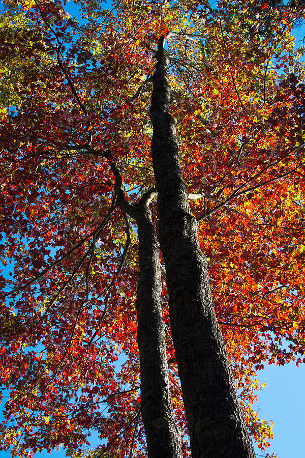 Autumn Photograph - Fall From Above by David Patterson