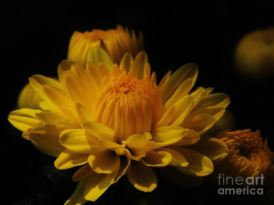 Flowers Photograph - Fall Gold by Aubrey Campbell