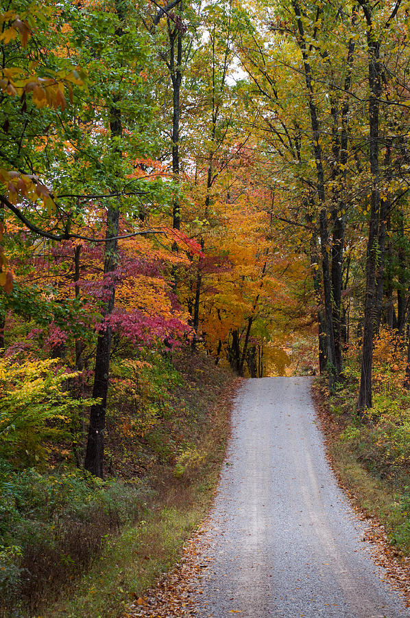 Fall Photograph - Fall In Southern Indiana by Melissa Wyatt
