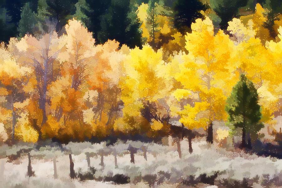 Aspen Photograph - Fall In The Sierra by Carol Leigh