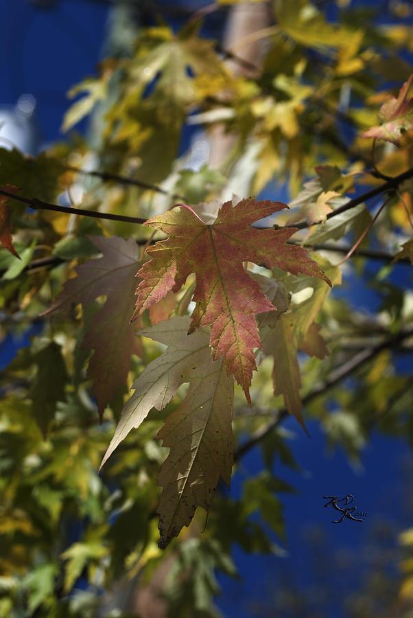 Abstract Photograph - Fall by Kelly Rader