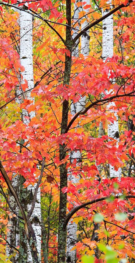 Minnesota Photograph - Fall Layers II by Adam Pender