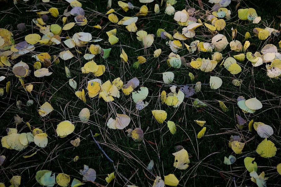 Fall Leaves Photograph - Fall Leaves by John Wong