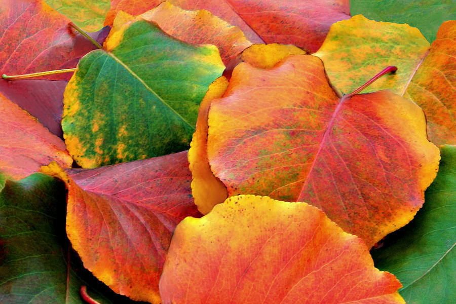 Leaves Photograph - Fall Leaves by Sheila Kay McIntyre