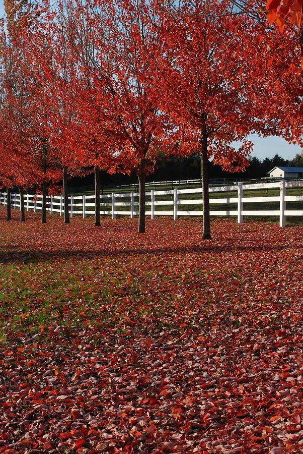 Fall Oak Reds by Jan Piet