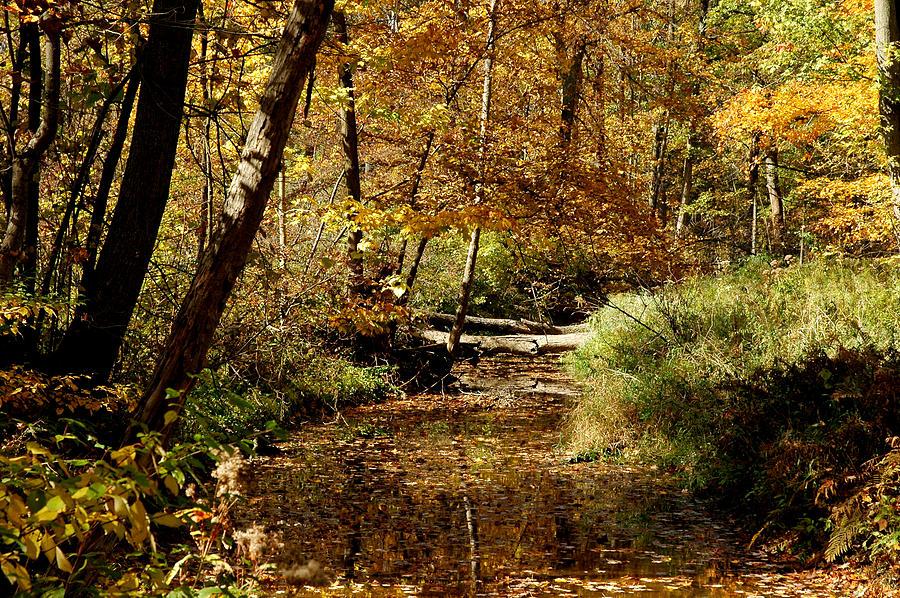 Landscapes Photograph - Fall River Colors by LeeAnn McLaneGoetz McLaneGoetzStudioLLCcom