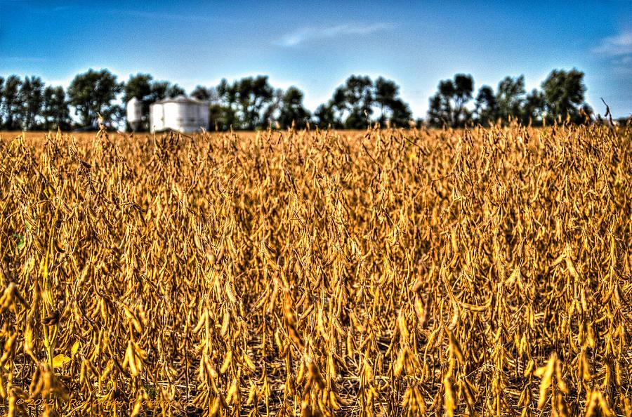 Landscape Photograph - Fall Soy Field by Dan Crosby