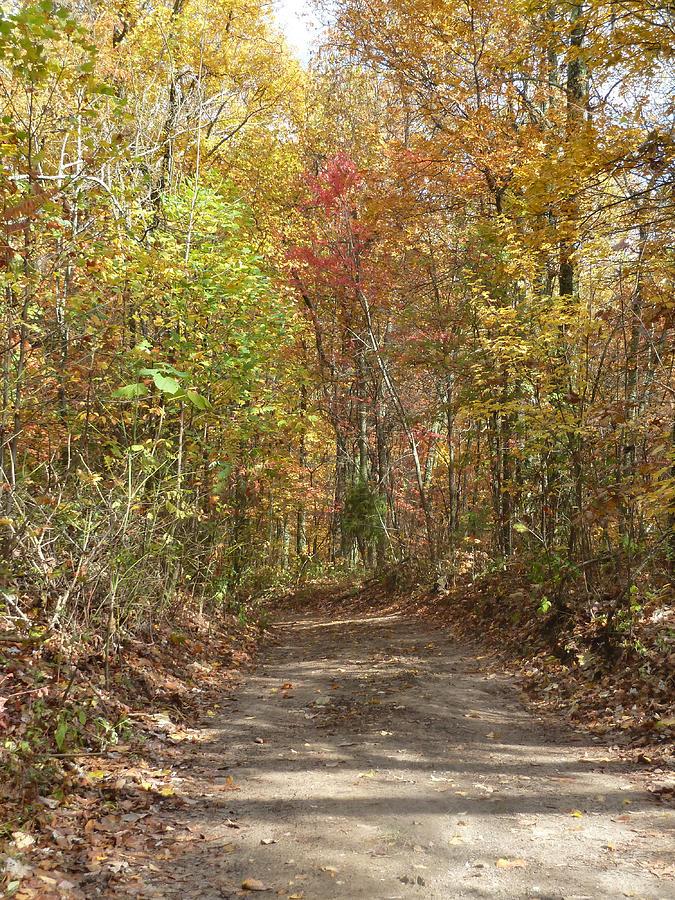 Fall Digital Art - Fall Trail by Bill Kennedy