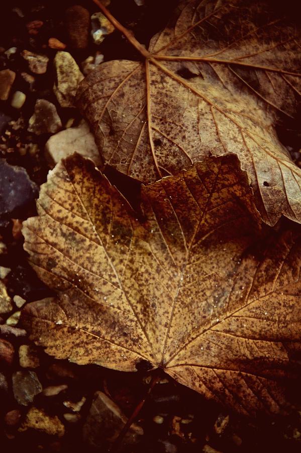 Leaves Photograph - Fallen From Grace by Odd Jeppesen