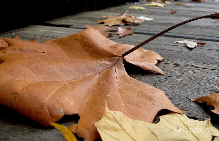 Leaf Photograph - Fallen Leaf by Jack Schultz