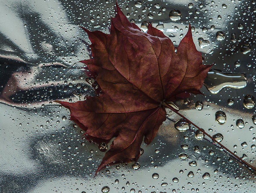 Still Life Photograph - Fallen Leaf by Vladimir Kholostykh