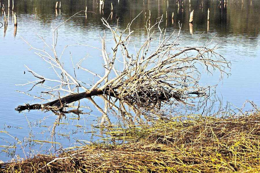 Fallen Tree-lake Wilhelmina Photograph - Fallen Tree by Douglas Barnard