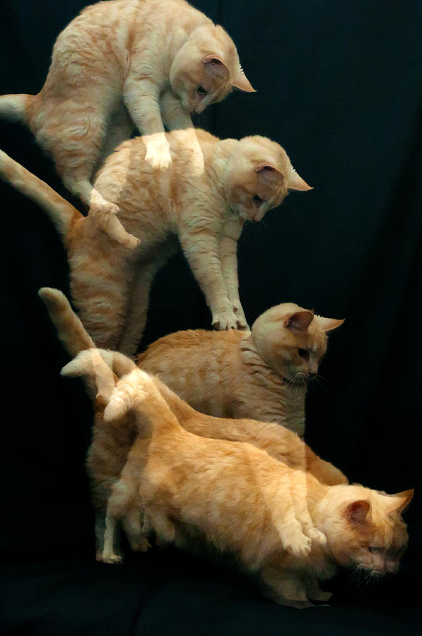 Falling Cat Photograph by Micael  Carlsson