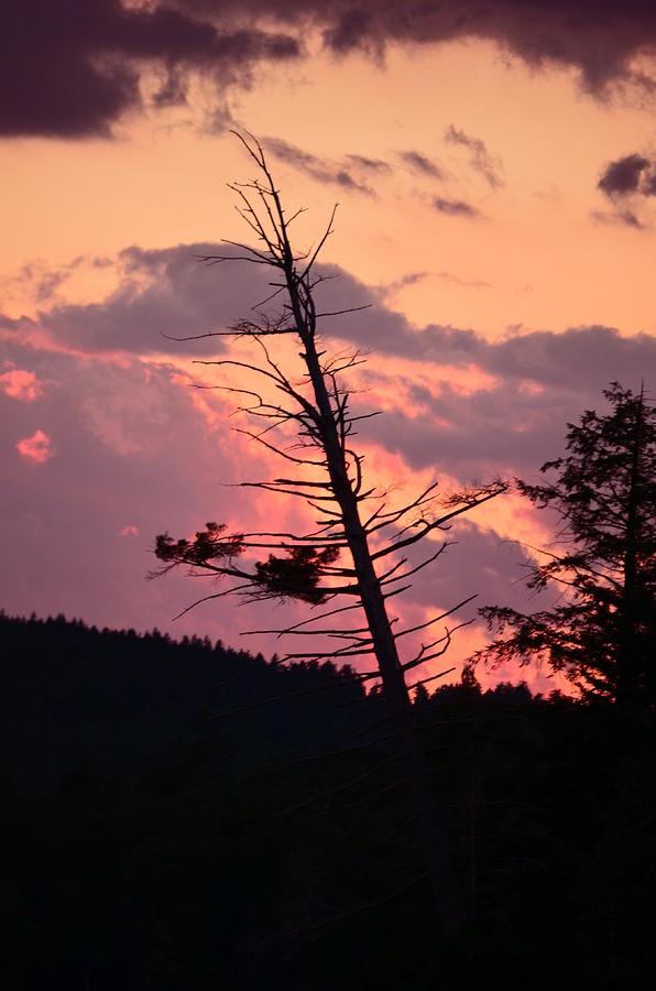 Sunset Photograph - Falling Into The Sunset by Mandi Howard
