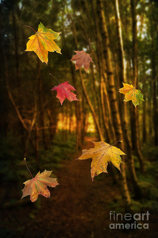 Autumn Photograph - Falling Leaves by Amanda Elwell