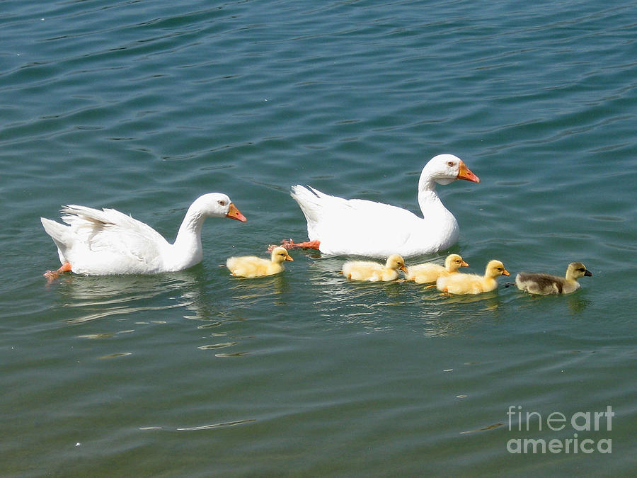 Adorable Photograph - Family Outing On The Lake by Ed Churchill