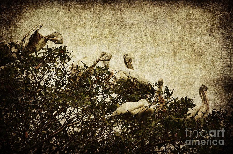 Pelican Photograph - Family Tree by Andrew Paranavitana