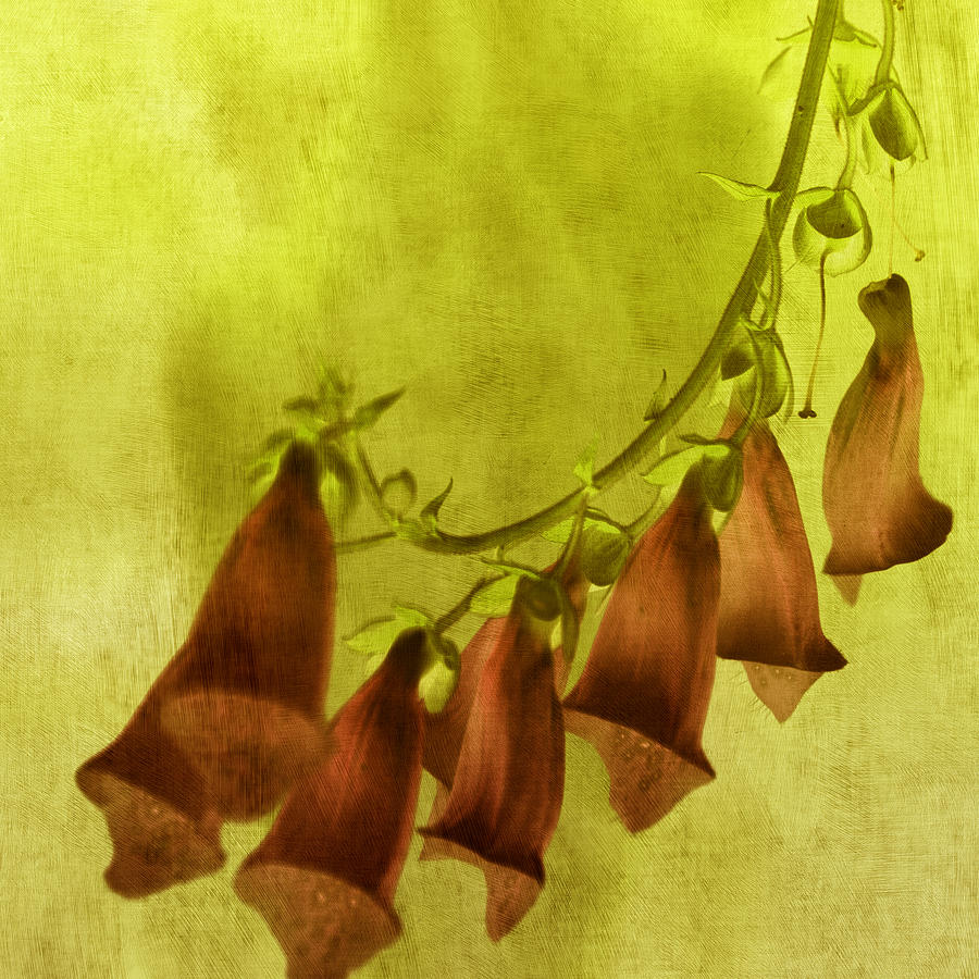 Foxglove Photograph - Fancy Foxglove by Bonnie Bruno