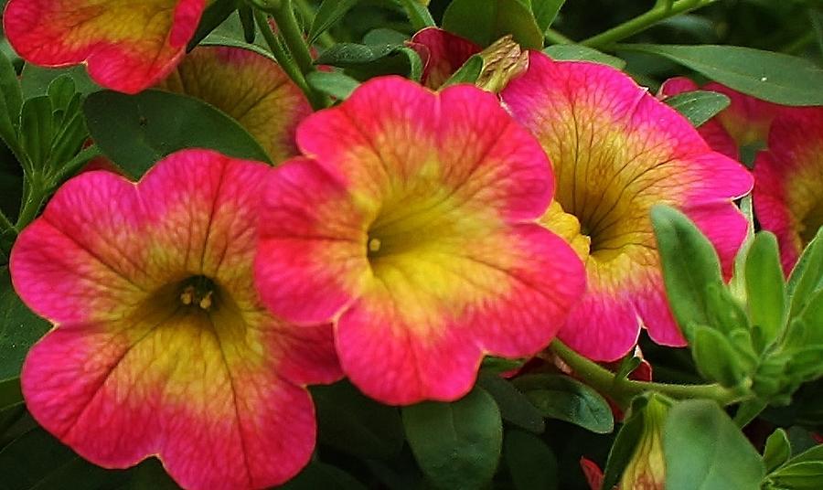 Flora Photograph - Fantasia Delight by Bruce Bley