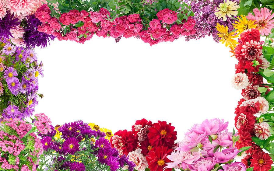Fantastic Flowers Frame Photograph by Aleksandr Volkov