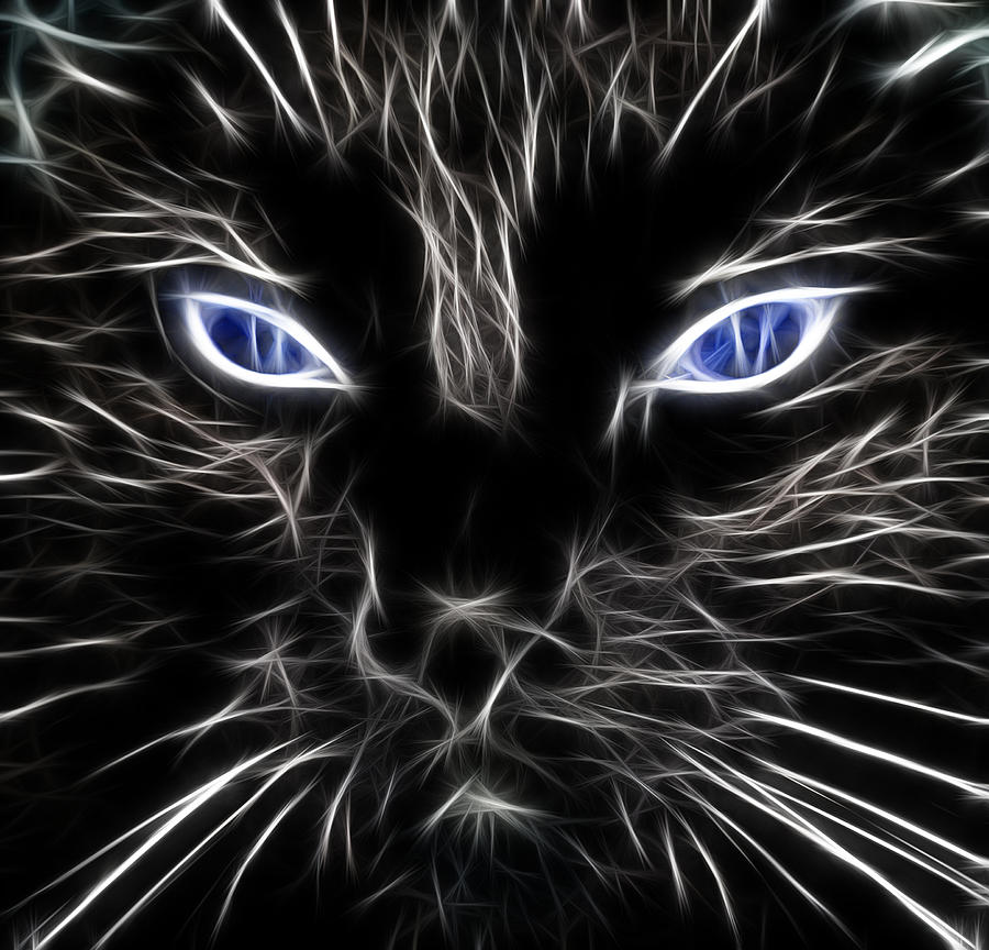 Fantasy Black Cat Blue Eyes Photograph by Paul Ward