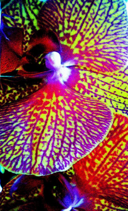 Digital Painting - Fantasy Orchid 1 by Renate Nadi Wesley