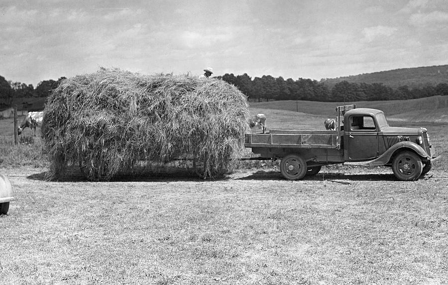 Adult Photograph - Farm Scene by George Marks
