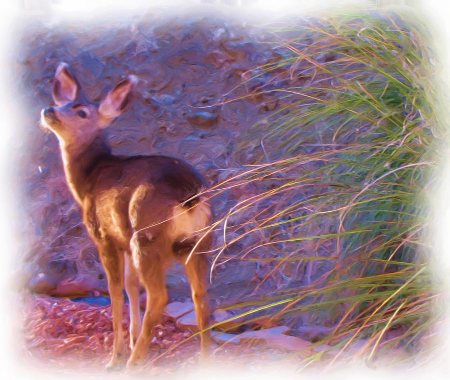 Fawn Photograph - Fawn In Last Light by FeVa  Fotos
