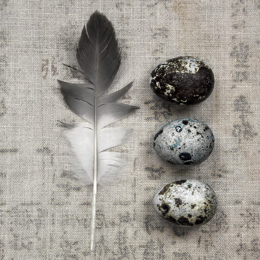 Carol Leigh Photograph - Feather And Three Eggs by Carol Leigh